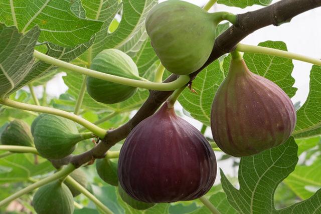 Το  φρούτο που ρίχνει την αρτηριακή πίεση