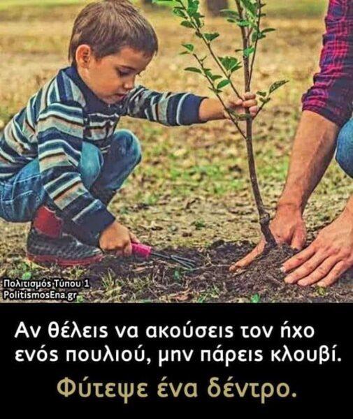 Η Αξία ενός Δέντρου …. οφείλουμε να την μεταδώσουμε …