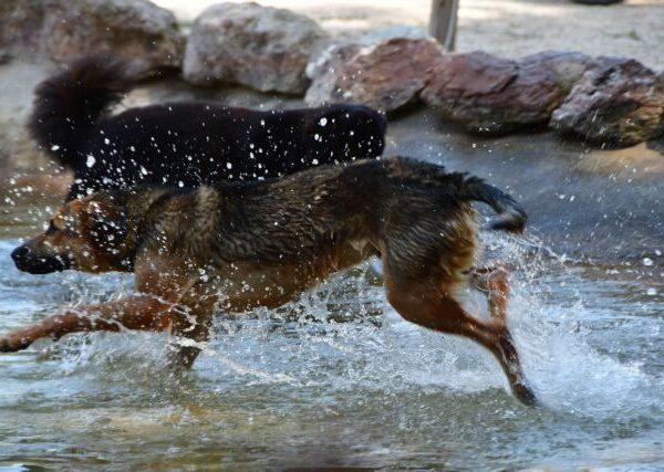 Η Αίγινα φιλοδοξεί να γίνει η πρώτη κοινότητα χωρίς αδέσποτους σκύλους