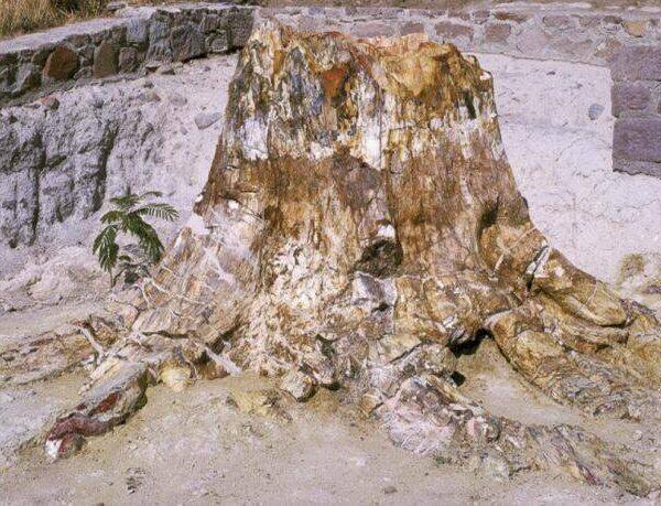 Απολιθωμένο δάσος Λέσβου – νέα ευρήματα