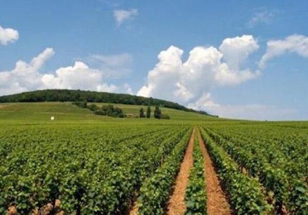 Φιλοπεριβαλλοντικές δράσεις θα χρηματοδοτεί η νέα ΚΑΠ