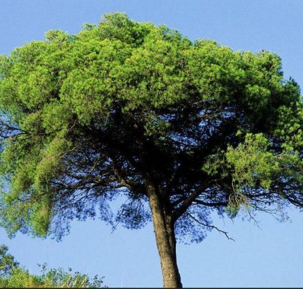 Νέο Ψηφιακό Εκπαιδευτικό Πρόγραμμα: Γνωρίστε τα φυτά του Απολιθωμένου Δάσους Λέσβου