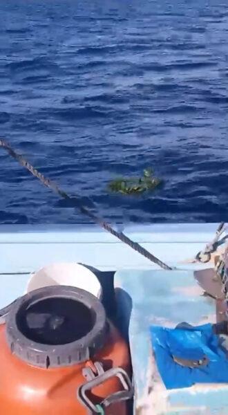 Έλληνας καπετάνιος 'ξεφτίλισε' τους Τούρκους και έριξε στεφάνι στα Ίμια! (Βίντεο)