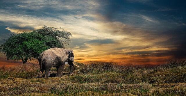 Η φύση καταρρέει: 68% μείωση πληθυσμών άγριας ζωής από το 1970