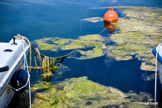 Το φαινόμενο της «πράσινης παλίρροιας» στο λιμάνι της Πρέβεζας – Φωτό