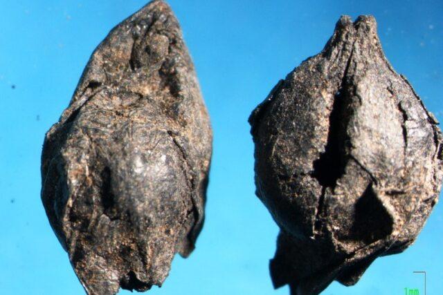 Ένα ποτηράκι κρασί από τα …νεολιθικά χρόνια και πλιγούρι 4000 ετών!