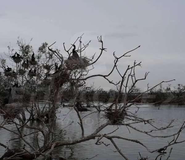 Λίμνη Κερκίνη: Πανέμορφη όλες τις εποχές (VIDEO drone)